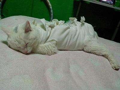 猫咪绝育后怎么照顾
