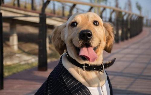 狗狗绝育的好处