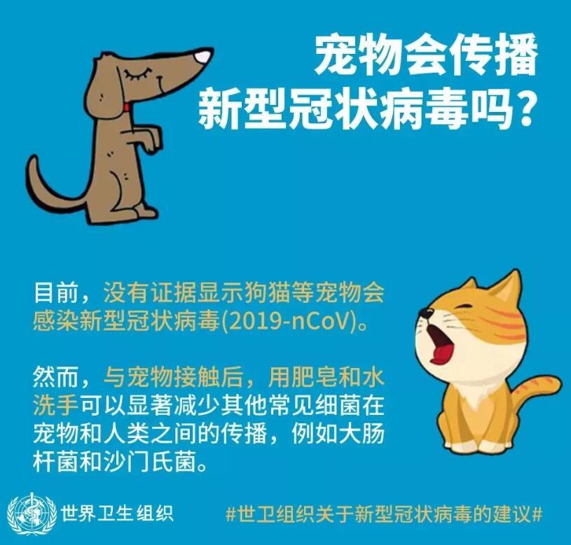 宠物会传播新型冠状病毒吗?理性防疫是关键