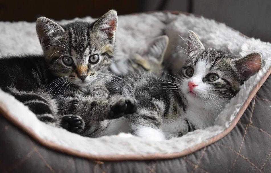 疫情期间怎么照顾宠物?