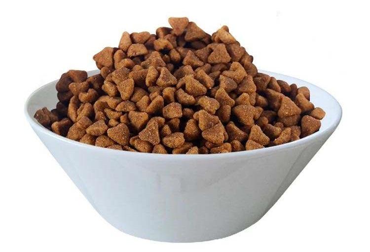 猫可以吃狗粮吗,猫吃狗粮会怎么样?