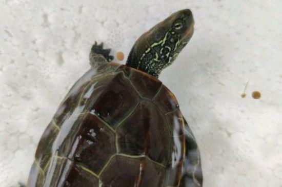 龟粮干着吃还是放水里?