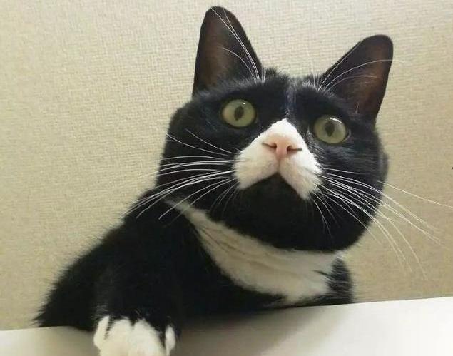 猫一天吃100克猫粮多吗?