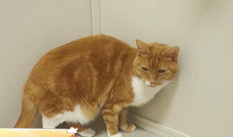 猫咪不吃东西、食欲不振怎么办?
