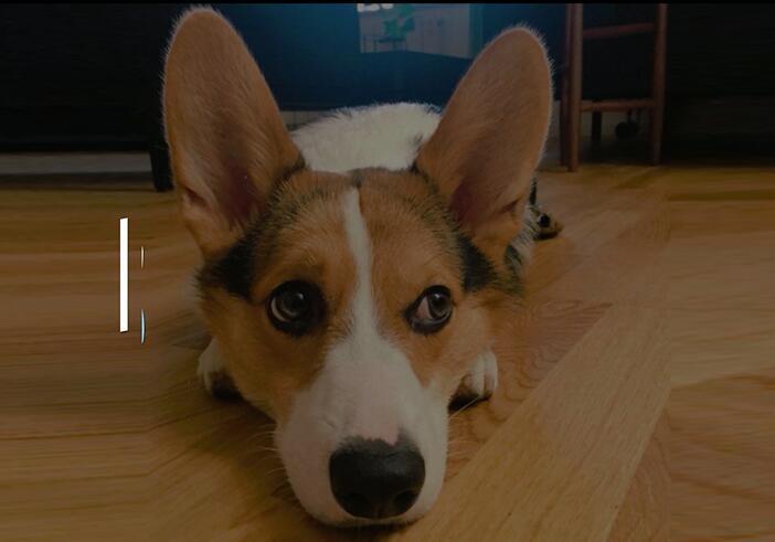 狗狗食欲不振、不吃东西怎么办?