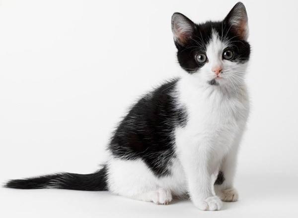 猫咪什么时候绝育?