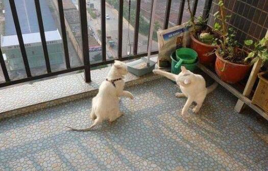 养猫的诡异禁忌