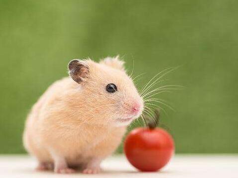 仓鼠一天喂几次