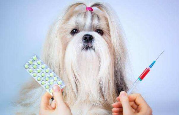 狗狗一套疫苗多少钱啊
