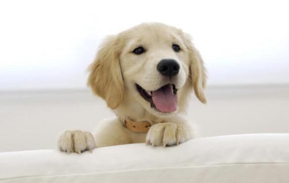 狗狗每年都要打疫苗吗?