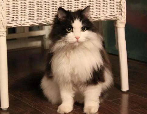 猫只吃猫粮可以吗