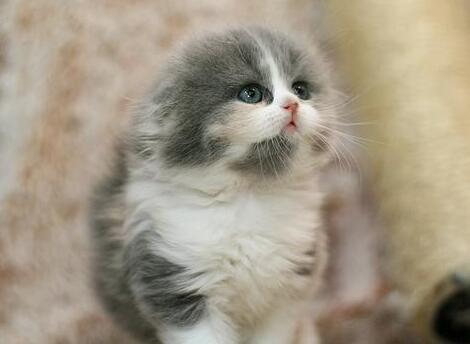 猫吃猫砂怎么办
