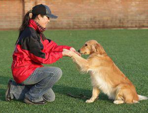 怎么训练狗狗坐下
