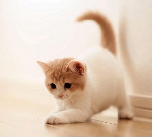 幼猫如何喂养