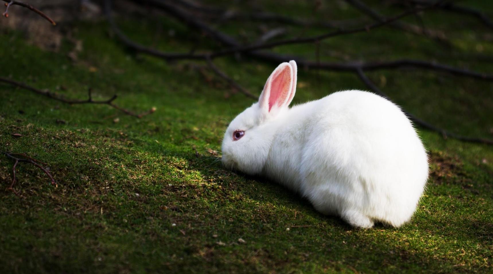 一月大的兔子喂养方法