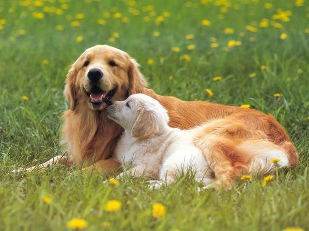如何预防狗狗大脑炎