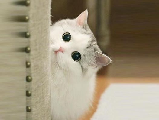 养猫不要养下面5种猫