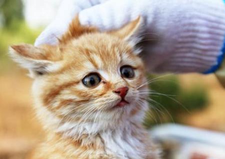 猫鼻支和感冒的区别