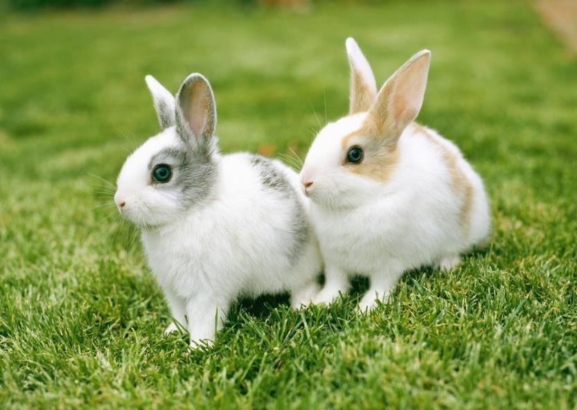 兔子避暑的办法