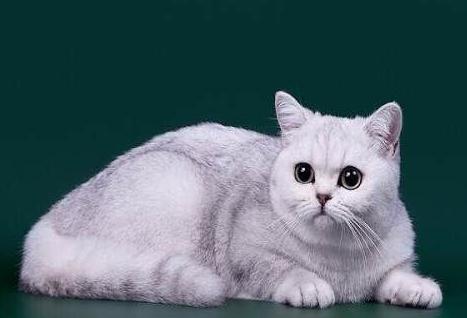 猫鼻支从发病到死亡几天