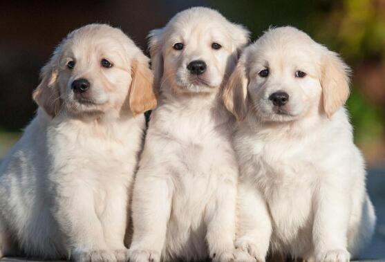 狗狗体内所需营养有哪些