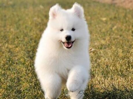 狗狗吃什么毛发亮,毛色好