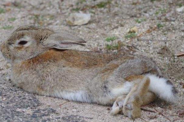 兔子繁殖办法