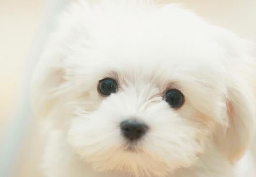 狗狗不吃狗粮怎么办才能让它吃