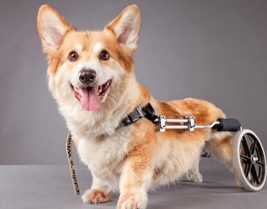 狗狗很依赖主人的表现
