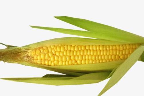 狗狗能吃玉米吗