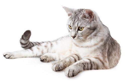 猫生小猫前提示主人