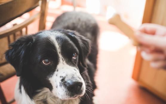 怎样才能让狗狗信任自己